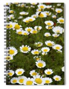 Dozens Of Daisies Spiral Notebook