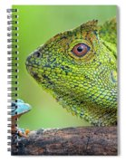 Dragon Forest And Frog Spiral Notebook