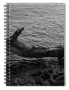Dragon Taking A Drink Spiral Notebook
