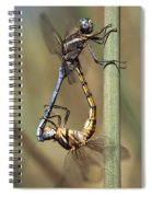 Dragonflies Mating Spiral Notebook