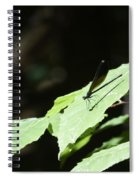 Dragonfly 3 Spiral Notebook
