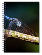Dragonfly Beauty Spiral Notebook