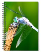 Dragonfly Blue Spiral Notebook