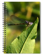 Dragonfly Called Funny Face Spiral Notebook