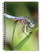 Dragonfly Captures Tiny Cockroach Spiral Notebook