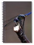 Dragonfly Color Spiral Notebook