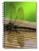Dragonfly Colors Spiral Notebook