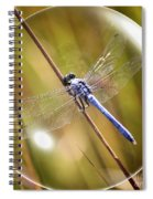 Dragonfly In A Bubble Spiral Notebook