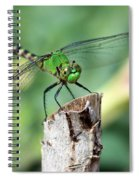 Dragonfly In The Flower Garden Spiral Notebook