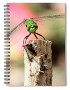 Dragonfly In The Petunias Spiral Notebook