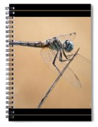 Dragonfly Needlepoint With Border Spiral Notebook
