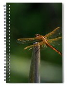 Dragonfly On A Twig Spiral Notebook