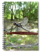 Dragonfly On Barbed Wire Spiral Notebook