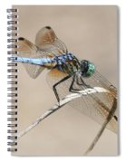 Dragonfly On Bent Reed Spiral Notebook