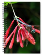 Dragonfly On Honeysuckle Spiral Notebook