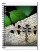 Dragonfly On Log Spiral Notebook