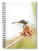 Dragonfly Perch Spiral Notebook