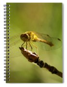 Dragonfly Perched Spiral Notebook