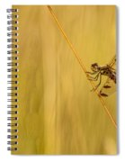 Dragonfly Pole Dance Spiral Notebook