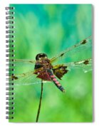 Dragonfly Rear Approach Spiral Notebook