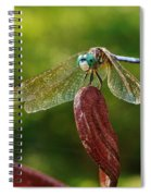 Dragonfly Resting II Spiral Notebook