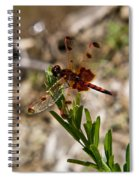 Dragonfly Resting On The Green Spiral Notebook