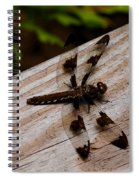 Dragonfly Spots Spiral Notebook