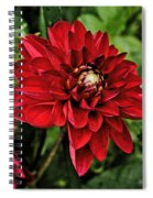 Dramatic Dahlia Spiral Notebook