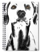Drawing Of A Dalmatian Dog Spiral Notebook