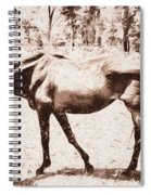 Drawn Ranch Horse Spiral Notebook
