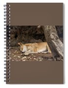 Dream Time Spiral Notebook