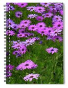 Dreaming Of Purple Daisies  Spiral Notebook