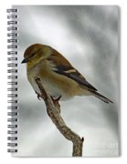 Dreaming Of Spring - American Goldfinch Spiral Notebook