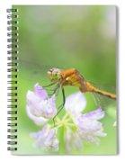 Dreamy Dragon Spiral Notebook