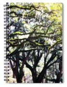 Dreamy Live Oaks Spiral Notebook