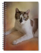 Dreamy Snowshoe Cat Spiral Notebook