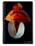 Composition With Dried Flowers Red Hat. Spiral Notebook