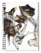 Dried Psilocybe Cubensis Spiral Notebook