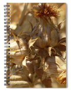 Dried Safflower Spiral Notebook