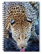 Drinking Leopard Spiral Notebook