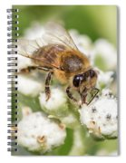 Drinking Up The Nectar, Apis Mellifera Spiral Notebook