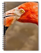 Dripping Flamingo Spiral Notebook