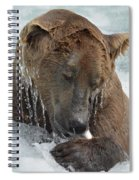Dripping Grizzly Bear Spiral Notebook