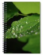 Droplets On A Leaf  Spiral Notebook