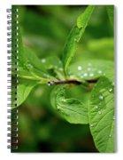 Droplets On Spring Leaves Spiral Notebook