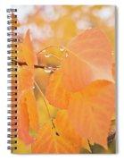 Drops Of Autumn Spiral Notebook