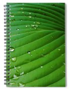 Drops Of Spring Rain Spiral Notebook