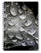 Drops On A Feather Spiral Notebook