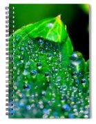 Drops On Leaf Spiral Notebook
