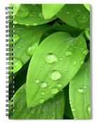 Drops On Leaves Spiral Notebook